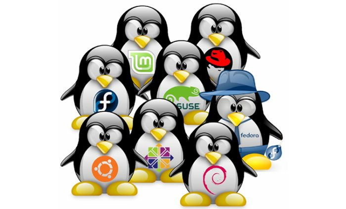 Which Linux based OS sould I go for?